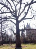 Allsmäktigt träd framme av solen och slotten Royaltyfri Foto