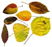 Allsorts of autumn leaves Royalty Free Stock Photo