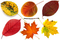 Allsorts of autumn leaves on a white background 1.