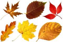 Allsorts de las hojas de otoño en un fondo blanco 2 Imagen de archivo