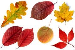 Allsorts de las hojas de otoño en un fondo blanco 3 Imagen de archivo libre de regalías