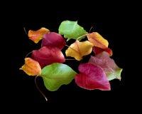 Allsorts der Herbstblätter Stockfoto