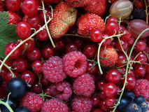 Allsorts From Different Fruit. A raspberry a strawberry a gooseberry a currant Royalty Free Stock Photography
