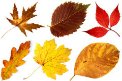 Allsorts Of Autumn Leaves On A White Background 2