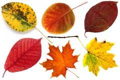 Allsorts van de herfst gaat op een witte achtergrond 1 weg. Stock Afbeeldingen