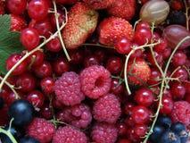 Allsorts van Verschillend Fruit Royalty-vrije Stock Fotografie