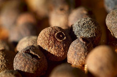 Allspice close-up. Cooking ingredients Royalty Free Stock Photo