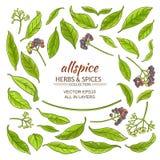 Allspice elements set Royalty Free Stock Image