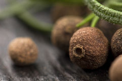 Allspice with fresh rosemary Royalty Free Stock Images