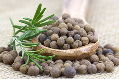 Allspice with fresh rosemary Royalty Free Stock Photos