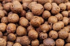Allspice (jamaica pepper) Stock Image