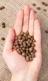 Allspice pepper aroma spice seeds in Royalty Free Stock Photo