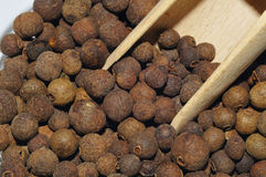 Allspice, Pimenta, Stock Photo