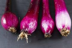 Allum purple and green salad spring onions, scallions, macro. Stock Images