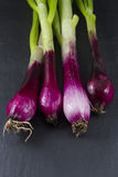 Allum purple and green salad spring onions, scallions, macro. Royalty Free Stock Image