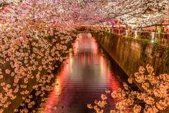 Allumez Cherry Blossom Sakura à la rivière de Meguro à Tokyo photographie stock libre de droits