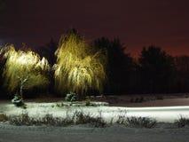 Allumez sur l'arbre neigeux la nuit Photos stock