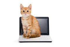 Allungamenti del gattino che stanno sul computer portatile Immagini Stock Libere da Diritti