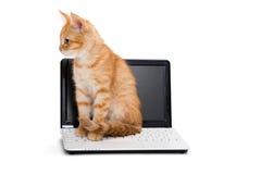 Allungamenti del gattino che stanno sul computer portatile Fotografia Stock