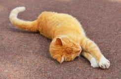 Allungamenti del gatto dello zenzero Fotografia Stock Libera da Diritti