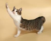 Allungamenti a strisce del gattino su giallo Fotografia Stock