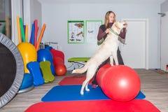 Allungamento del cane Immagini Stock