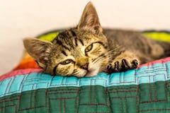 Allungamento del gattino Immagine Stock
