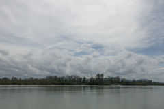 Allungamento della mangrovia sotto il cielo nuvoloso Fotografia Stock