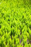 Allungamento delle piante verdi al sole Fotografie Stock