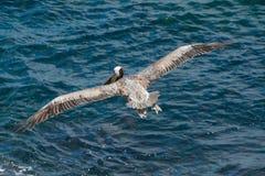 Allungamento delle sue ali Immagini Stock