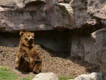 Allungamento divertente dell'orso bruno Immagine Stock