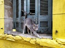 Allungamento grigio del gatto Fotografie Stock Libere da Diritti