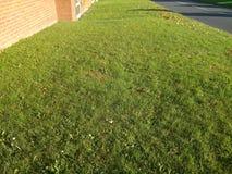 Allungamento lungo di erba verde intenso Immagini Stock