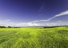 Allungando al campo di orizzonte dei fiori Fotografia Stock Libera da Diritti