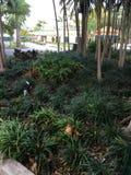 Allureing gröna växter arkivbilder