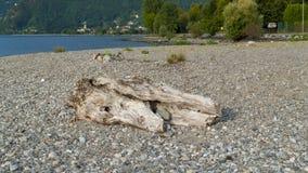 Alluvial, épave et jet à la mer, tronc, bois avec des trous passés sur la plage Gravedona, lac Como photos stock