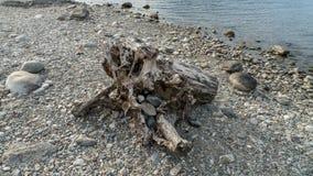 Alluvial, épave et jet à la mer, tronc, bois avec des trous passés sur la plage Gravedona, lac Como photographie stock