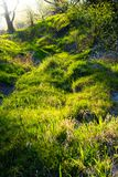 Alluvial forest flooded with sunlight Stock Images