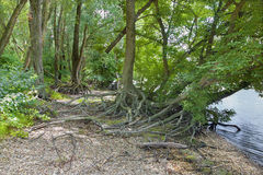 Alluvial forest on the waterfront of Danube in National park  Do Royalty Free Stock Photo
