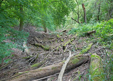 Alluvial forest on the waterfront of Danube in National park Donau-Auen Stock Image