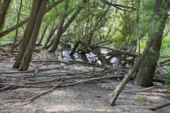 Alluvial forest on the waterfront of Danube in National park Donau-Auen Stock Photography