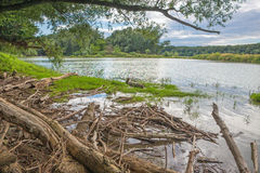 Alluvial forest on the waterfront of Danube in National park Donau-Auen in Austria.. Alluvial forest on the waterfront of Danube in National park Donau-Auen in Stock Photos