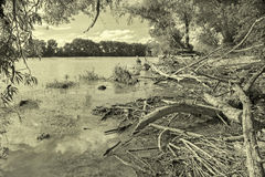 Alluvial wood on the waterfront of Danube in National park  Donau-Auen Stock Photo