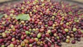 Alluvialer Kaffee für Schutzwände und Trockner stock footage