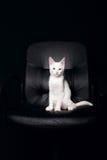 allvarlig katt Arkivfoto