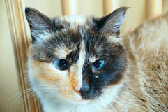 Allvarlig katt Royaltyfria Foton