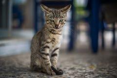 Allvarlig katt i Zakynthos, Grekland Arkivfoto