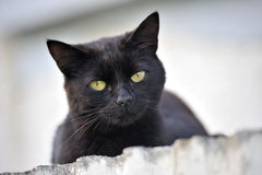 Allvarlig katt som ner ser Royaltyfri Foto