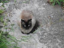 Allvarlig katt som ser rak på kameran royaltyfri fotografi