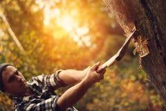Allvarlig och stark skogsarbetare som hugger av trä royaltyfri fotografi